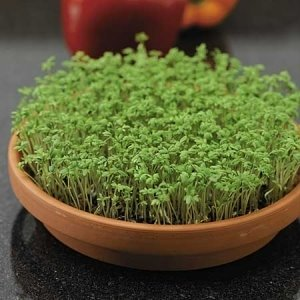 Garden Cress Extract Kills 97 of Breast Cancer Cells in Vitro