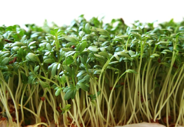 Garden Cress Extract Kills 97 Of Breast Cancer Cells Nb 用户
